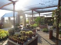 Beautiful cafe with cactus garden near the Brandberg