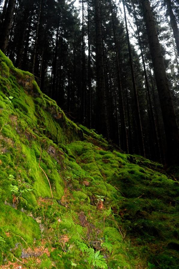 Amazing wall of moss