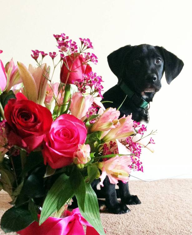 The puppy sent me flowers, but he was scared of them.